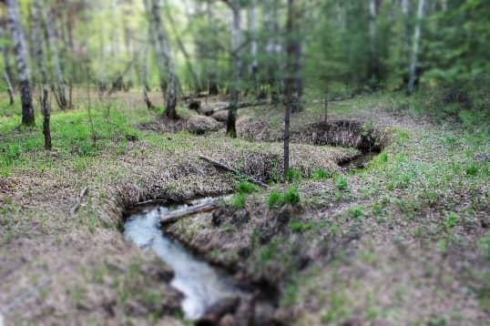 пруд в лесу